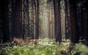 обои для рабочего стола 2560x1600 природа, лес, сосны