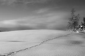 след, зима, снег, дерево