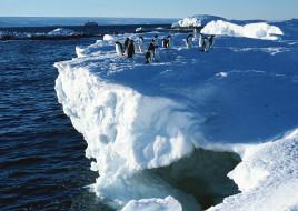 море, снег, стая, обрыв, лед, пингвины
