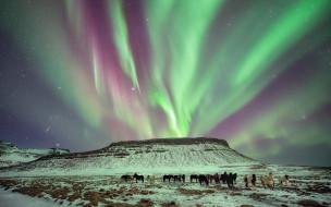 снег, горы, табун, лошади, небо, северное сияние