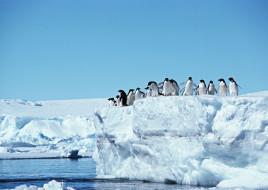 пингвины, стая, прыжок, вода, лед