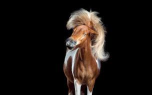 лошадь, пегая, прищур