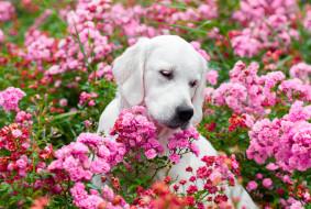 взгляд, собака