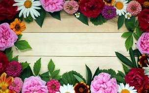 цинния, пион, роза