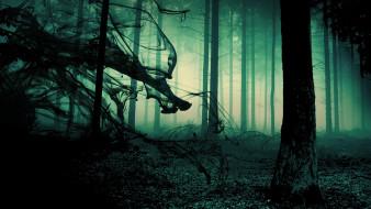 тьма, лес, туман