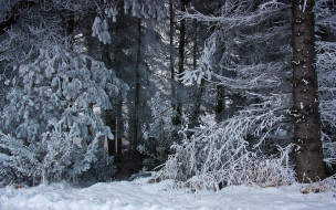 природа, лес, снег