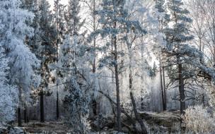 природа, лес, иней