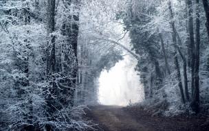 лес, дорога, зима