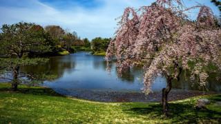весна, цветение, озеро