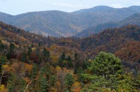 Россия, деревья, осень, Приморье, сопки