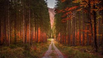 дорога, сосны, осень, лес