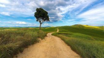 дорога, полевая, поля, дерево