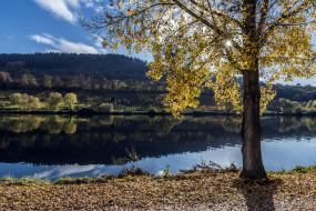 дерево, осень, река