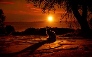 животные, коты, закат, дерево, фон, котенок