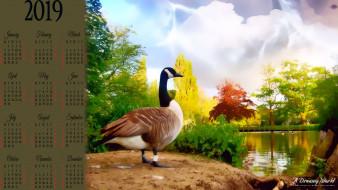 растение, calendar, 2019, водоем, природа, утка, птица