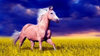 лошадь, цветы, небо, поле, степь