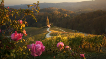горы, дом, розы