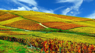 виноградники, холм