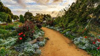 обои для рабочего стола 1920x1080 природа, парк, аллея, цветы