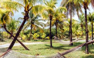 пальмы, гамаки