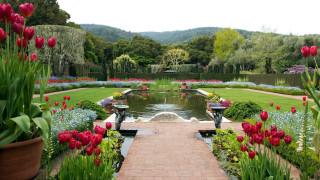 клумбы, цветы, фонтан