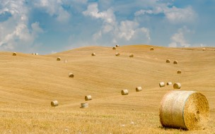 тюки, поле, солома