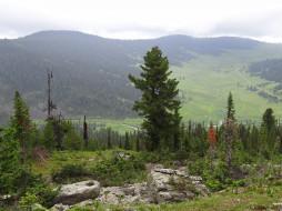 Природный парк, Россия, деревья, Сибирь, горы, Ергаки