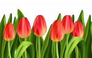 векторная графика, цветы , flowers, тюльпаны