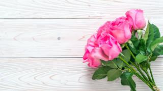 розы, бутоны