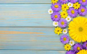 космея, хризантема, гербера