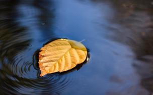 лист, вода, желтый, осенний