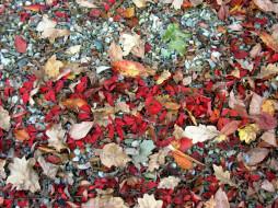 листья, камни, осень