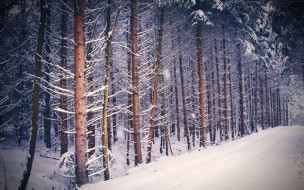 природа, лес, снег, зима, деревья