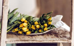бутоны, желтые, тюльпаны