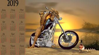 мотоцикл, птица, утка, животное, calendar, 2019