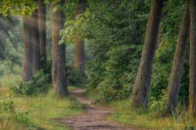 природа, лес, деревья, лучи