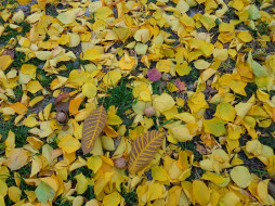 орехи, листья