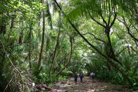 обои для рабочего стола 3072x2048 природа, лес, люди, просека, джунгли