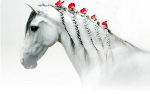 лошадь, белая, розы, голова, косички, цветы