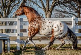 загон, ограда, деревья, лошадь