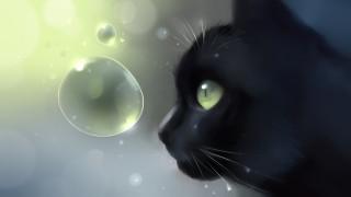 черный, пузырь, кот