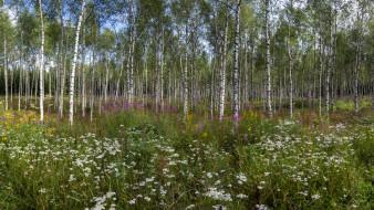 обои для рабочего стола 2048x1152 природа, лес, простор
