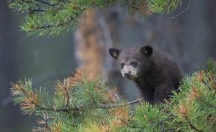 ветки, медвежонок