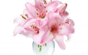 лилии, розовые, банка