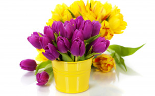 тюльпаны, желтые, розовые, ведро
