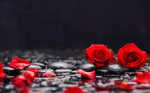 розы, лепестки, камни, красные