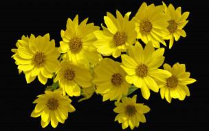 букет, желтые