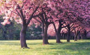 трава, цветение, весна, деревья
