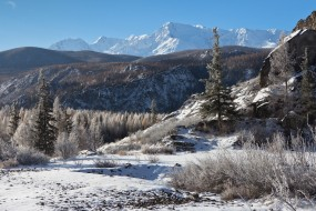 горы, природа, ели, леса, Алтай, пейзаж, снег