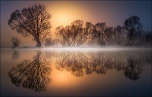 отражение, деревья, водоем